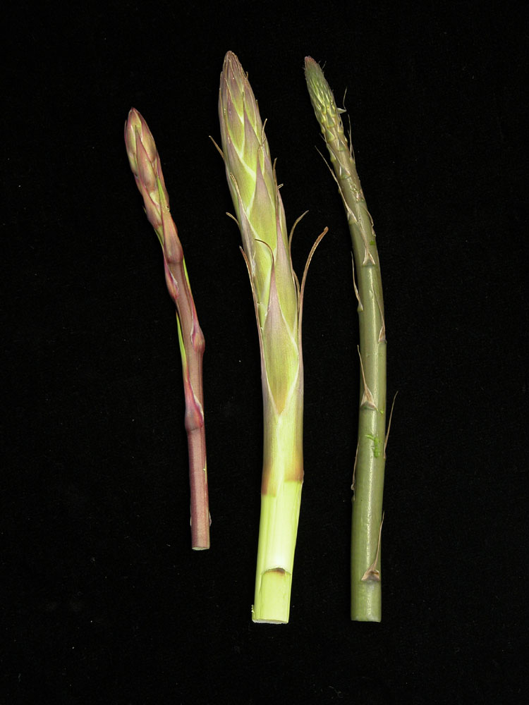 Nature S Harvest Plants