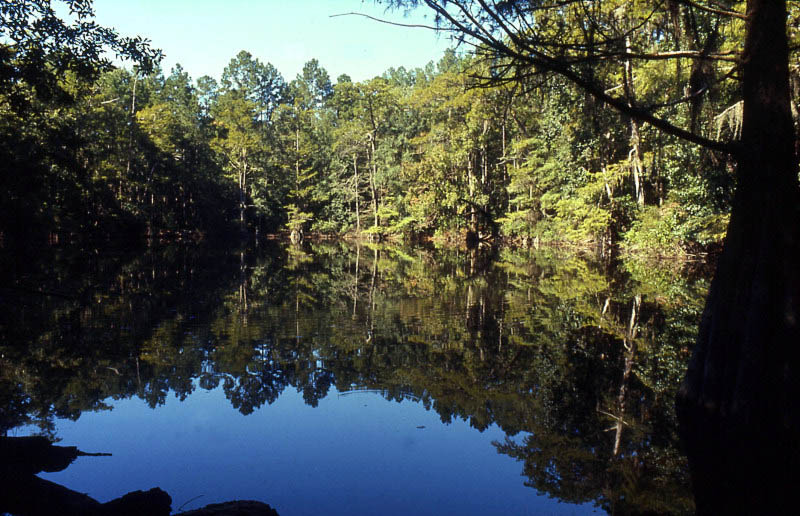 Dark pines and tall cypress are mirrored on the surface of ...