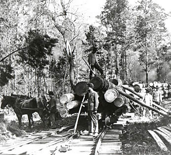 Aldridge Sawmill Logging In The Piney Woods - Us lumber industry map 1900
