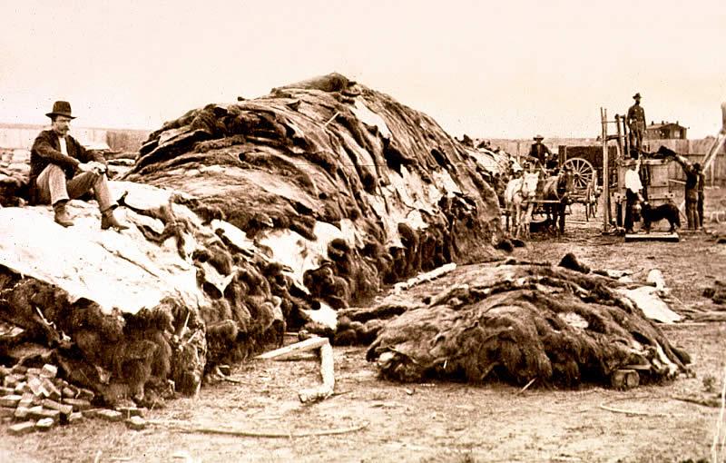 Image result for buffalo hunter
